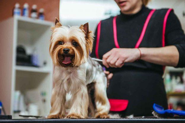 Safe Pet Grooming