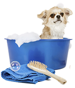 Pet Grooming Services - Orange County